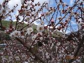 104年武陵農場櫻花季一日行20150211:DSC05484.JPG