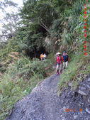 司馬庫斯神木群越嶺鴛鴦湖外圍出100林道20150715:DSC01674.JPG