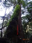 司馬庫斯神木群越嶺鴛鴦湖外圍出100林道20150715:DSC01688.JPG