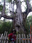 司馬庫斯神木群越嶺鴛鴦湖外圍出100林道20150715:DSC01692.JPG