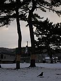 [07北海道]-2.2:DSCN5495.JPG