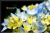 植物譜:IMG_9323.jpg