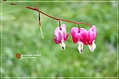 植物譜:IMG_9237.jpg