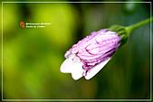 植物譜:IMG_9320.jpg