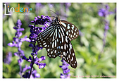 Flower & butterfly:IMG_5051.jpg