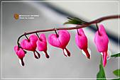 植物譜:IMG_9244.jpg