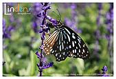 Flower & butterfly:IMG_5054.jpg