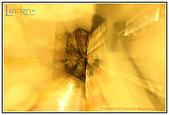 攝影館:金色魔法石.jpg