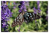 Flower & butterfly:IMG_5057.jpg