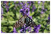 Flower & butterfly:IMG_5059.jpg