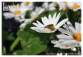 Flower & butterfly:IMG_5241.jpg