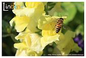Flower & butterfly:IMG_5245.jpg