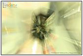 攝影館:魔法橄欖石.jpg