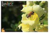 Flower & butterfly:IMG_5247.jpg