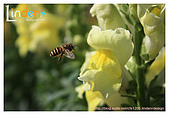 Flower & butterfly:IMG_5251.jpg