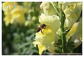 Flower & butterfly:IMG_5252.jpg
