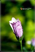 植物譜:IMG_9322.jpg