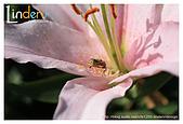 Flower & butterfly:IMG_5255.jpg