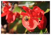 Flower & butterfly:IMG_5262.jpg