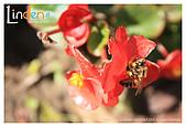 Flower & butterfly:IMG_5265.jpg