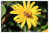 Flower & butterfly:IMG_5266.jpg