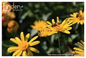 Flower & butterfly:IMG_5270.jpg