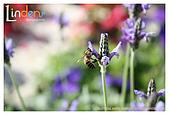 Flower & butterfly:IMG_5336.jpg