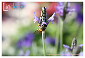 Flower & butterfly:IMG_5340.jpg