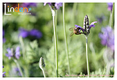 Flower & butterfly:IMG_5342.jpg