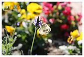 Flower & butterfly:IMG_5349.jpg