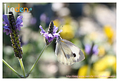 Flower & butterfly:IMG_5353.jpg