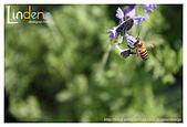 Flower & butterfly:IMG_5356.jpg