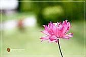 植物譜:IMG_9171.jpg