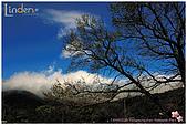 2009-02-28 陽明山花季:DSC_2501.jpg
