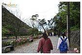 2009-02-28 陽明山花季:IMG_1738.jpg
