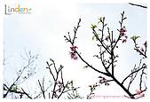 2009-02-28 陽明山花季:IMG_1743.jpg