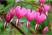 植物譜:IMG_9248.jpg
