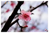 2009-02-28 陽明山花季:IMG_1762.jpg