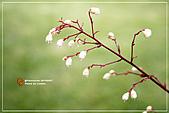 植物譜:IMG_9175.jpg