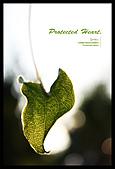 植物譜:IMG_6492x800.jpg