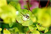 植物譜:IMG_9222.jpg