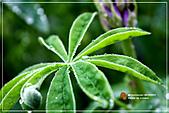 植物譜:IMG_9306.jpg