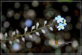植物譜:IMG_9228.jpg