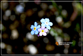 植物譜:IMG_9229.jpg