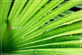 植物譜:IMG_9308.jpg