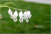 植物譜:IMG_9234.jpg