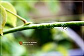 植物譜:IMG_9314.jpg