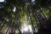 X 相片 V 迷路全世界:京都-竹林小道 (6)