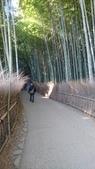 X 相片 V 迷路全世界:京都-竹林小道 (3)