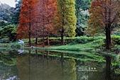 秋冬調色盤-落羽松:秋冬調色盤2.jpg